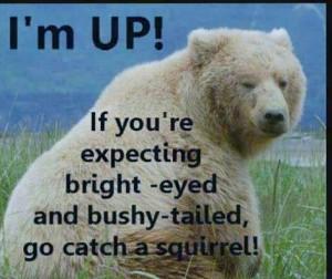 bear-awake joke