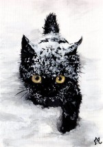 cat -Snow…-By-lenazlair-150x214