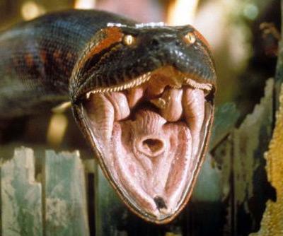 Hasil gambar untuk anaconda fangs
